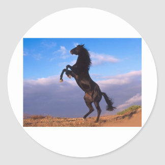 The majestic black stallion classic round sticker