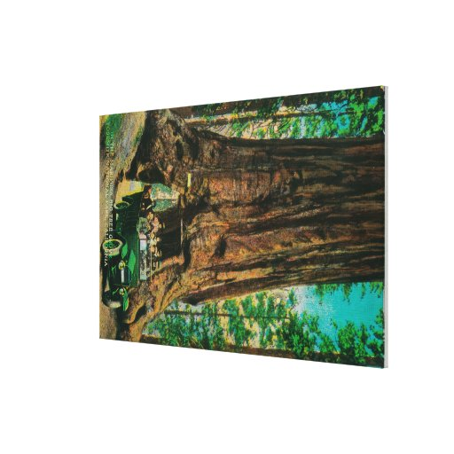 The Mariposa Big Tree Grove, Yosemite Stretched Canvas Prints