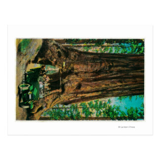 The Mariposa Big Tree Grove, Yosemite Postcard