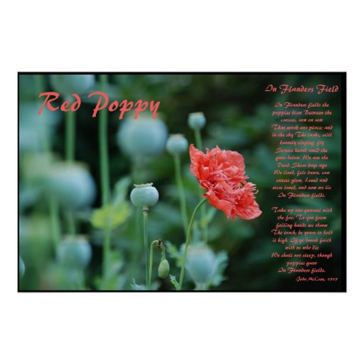The Meaning of the Red Poppy Posters