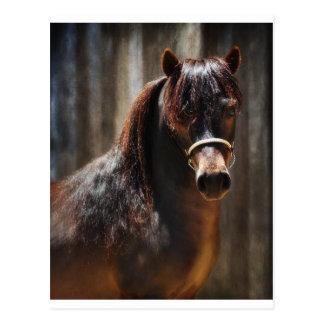 The Mini Stallion Postcard
