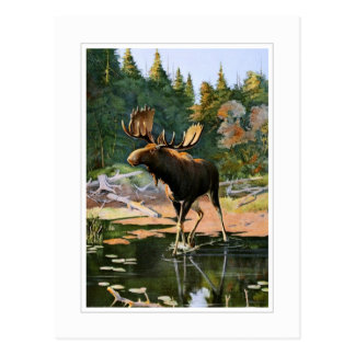 The Moose Postcard