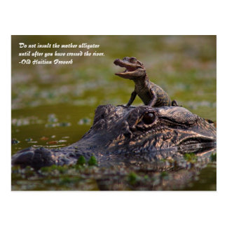 The Mother Alligator Postcard