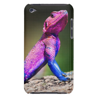 The Mwanza Flat-headed Agama on rock iPod Touch Cases