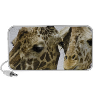 The name giraffe is derived from the Arab word Laptop Speaker
