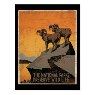 The National Parks Preserve Wild Life Post Cards