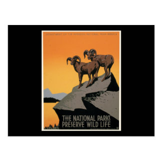The National Parks Preserve Wild Life Post Card