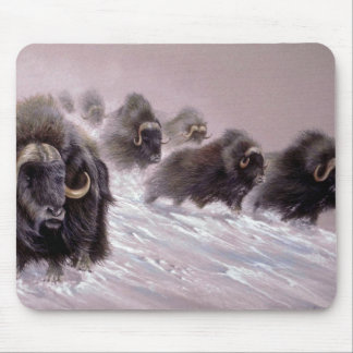 The northlands, Musk Ox Mouse Pad