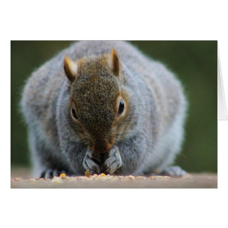 The Nutty Squirrel Greetings Card