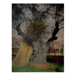 The Old Olive Tree, 1922 Postcard