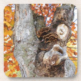 The Old Tree Coaster