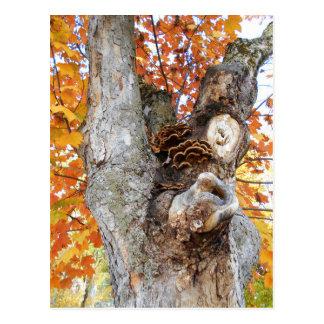 The Old Tree Postcard