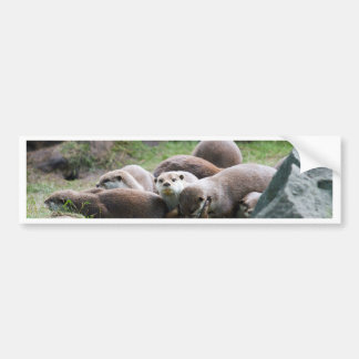 The otter family bumper sticker
