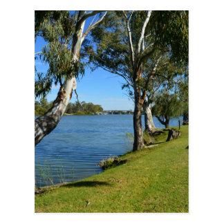 The Park Bench, Berri, South Australia, Postcard