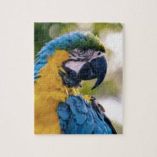The Parrot Puzzle