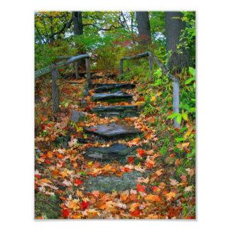 The Path Photo Art