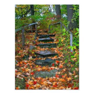 The path photographic print