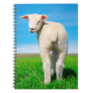 The peaceful sheep notebook