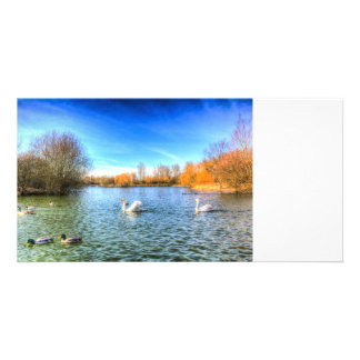 The Peaceful Swan Lake Photo Cards