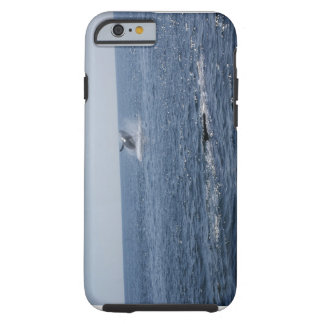The Perfect whale shot ever.... Tough iPhone 6 Case