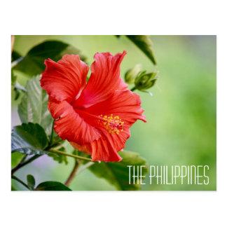 The Philippines hibiscus flower postcard