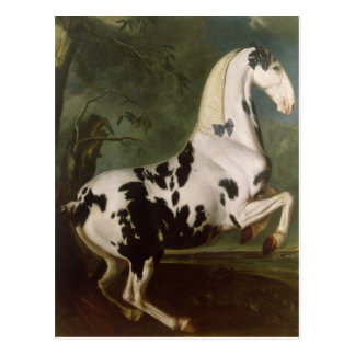The Piebald Stallion at the Eisgruber Stud Postcard