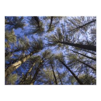 The Pine Barrens – Scenic NJ Art Photo