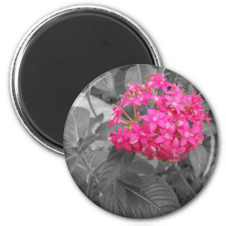 The Pink Flower Magnet