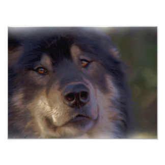 The Portrait of a Wolf Photo Art