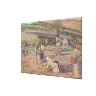 The Potato Harvest Canvas Print