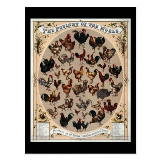 The poultry of the world postcard