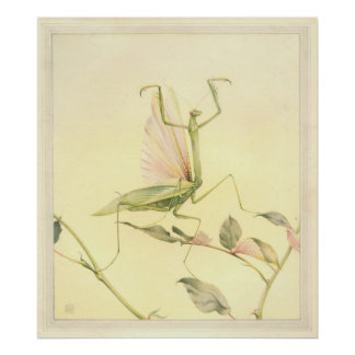 THE PRAYING MANTIS - Insect Book Illustration Poster