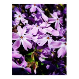 The Purple Flower Patch Postcard