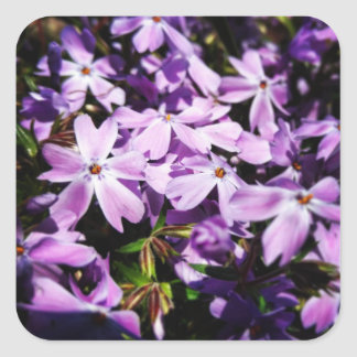 The Purple Flower Patch Square Sticker