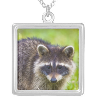 The raccoon, Procyon lotor, is a widespread, 2 Custom Necklace