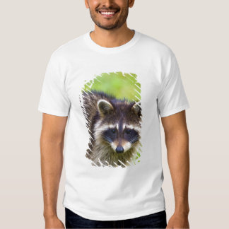 The raccoon, Procyon lotor, is a widespread, 2 Shirt