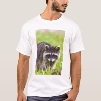 The raccoon, Procyon lotor, is a widespread, 2 T-Shirt