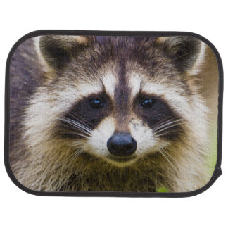 The raccoon, Procyon lotor, is a widespread, 3 Car Mat