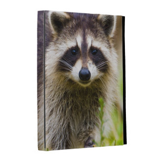 The raccoon, Procyon lotor, is a widespread, 3 iPad Folio Cases