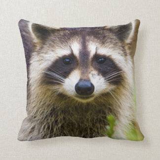 The raccoon, Procyon lotor, is a widespread, 3 Cushions