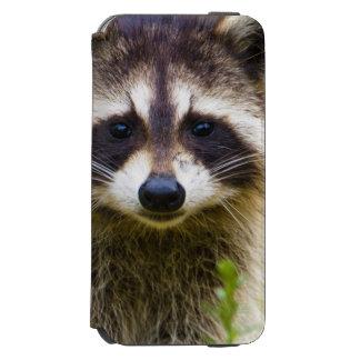 The raccoon, Procyon lotor, is a widespread, 3 Incipio Watson™ iPhone 6 Wallet Case
