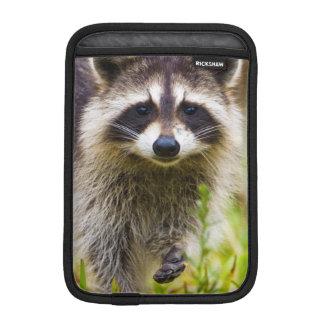 The raccoon, Procyon lotor, is a widespread, 3 iPad Mini Sleeves