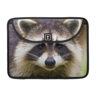 The raccoon, Procyon lotor, is a widespread, 3 MacBook Pro Sleeves