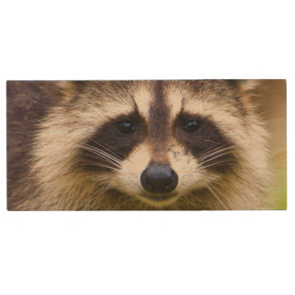 The raccoon, Procyon lotor, is a widespread, 3 Wood USB 2.0 Flash Drive