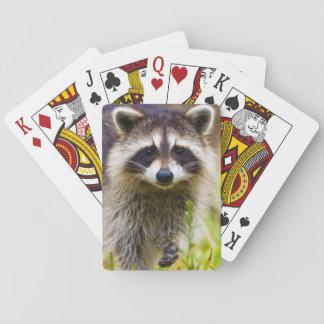 The raccoon Procyon lotor is a widespread 3 Card Decks