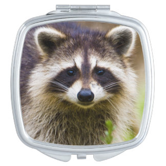 The raccoon, Procyon lotor, is a widespread, 3 Mirrors For Makeup