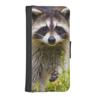 The raccoon, Procyon lotor, is a widespread, 3 iPhone 5 Wallet Case