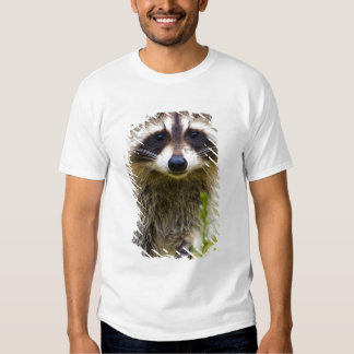 The raccoon, Procyon lotor, is a widespread, 3 Shirts
