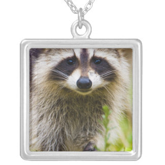 The raccoon, Procyon lotor, is a widespread, 3 Square Pendant Necklace