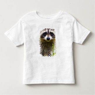 The raccoon, Procyon lotor, is a widespread, 3 T-shirts